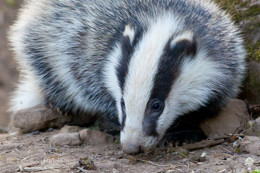 badgers darr apr 28-019