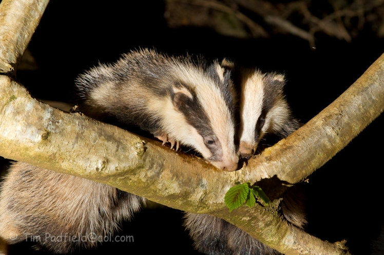 Badgers wed 23-006
