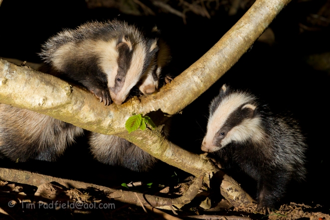Badgers wed 23-007