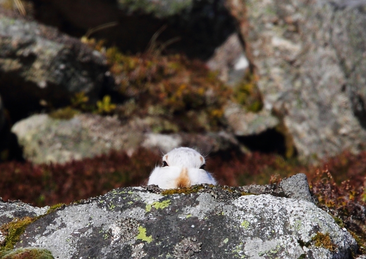 hare rock