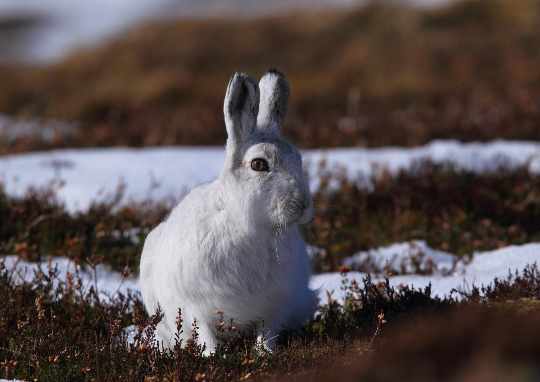 Hare sit