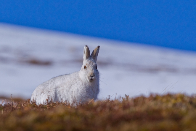 Scotland Hares-041