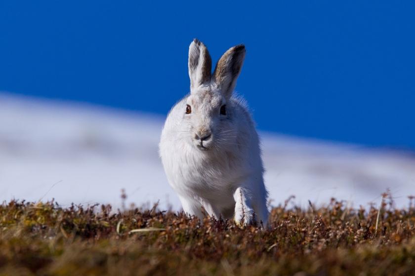 Scotland Hares-052